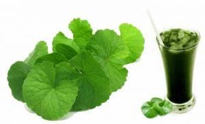 Rau má là loại rau có tác dụng trong việc chữa nám da sau sinh