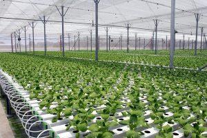 Mô hình trồng rau sạch của VinEco áp dụng nhiều công nghệ tiên tiến