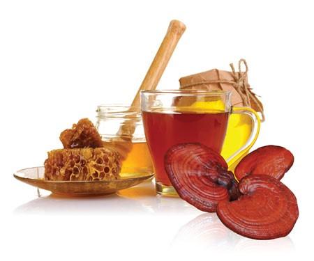 Nấm linh chi là thảo dược quan trọng trong Đông y