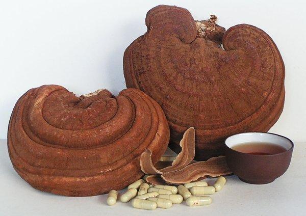 Sử dụng nấm linh chi rất tốt cho sức khỏe