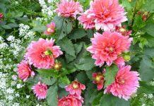 Đặt hoa tùy theo vị trí trong nhà