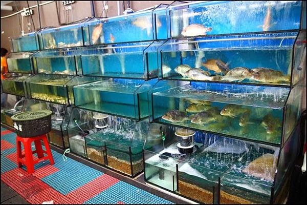 Mua bể cá hải sản cho nhà hàng Hà Nội ở đâu?